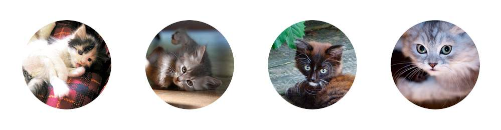 Comfort Kittens